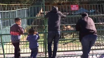 Cumhurbaşkanı Erdoğan'ın aslanları tavukla besleniyor
