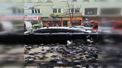 Gümüşhane'de güvercinler kent merkezini sardı