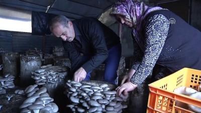 Kayın mantarı muhtarın geçim kaynağı oldu - ARTVİN