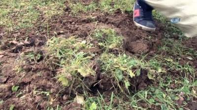 10 yıl boyunca biriktirdiği bozuk paraları toprağa gömdü