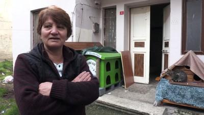 'Küçük Köşk'ünde 65 kedisiyle yaşıyor - YALOVA