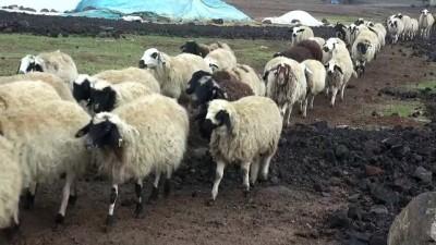 Şanlıurfa'da kuduz karantinası