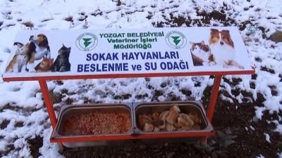 Yozgat'ta aç kalan sokak hayvanlarına belediyeden şefkat eli