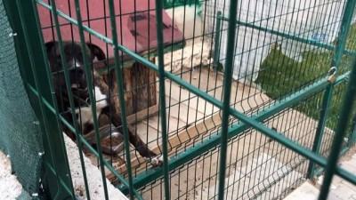 Kayınpeder ve damadı köpek kavgasında hayatını kaybetti