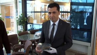 Adana'da nesli tükenmekte olan 'semender' bulundu