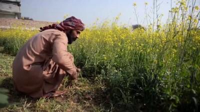 Pakistan'da temiz içme suyu problemi - RAVALPİNDİ