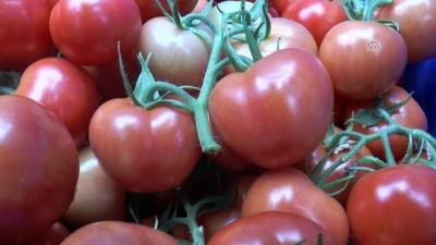 strateji - Pancar işlerken domates yetiştiriyorlar - KAYSERİ