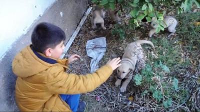Sahipsiz yavru köpeklere yuva oldular - OSMANİYE