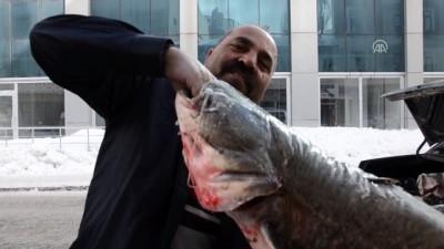 Yayın balıkları pazarlık usulü satılıyor - KARS