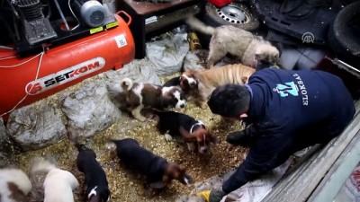 Yavru köpekler açık artırmayla satıldı - EDİRNE