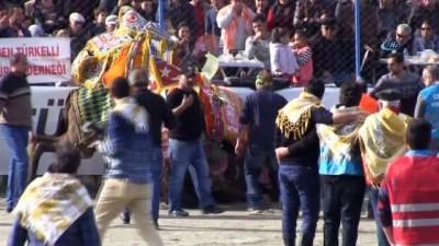 Binlerce kişi deve güreşine akın etti