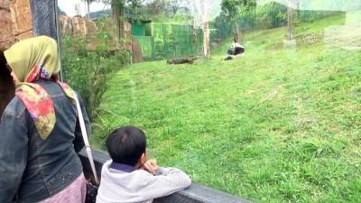 Çin'in diplomat pandalarına 'sarayda' özenle bakılıyor - CAKARTA
