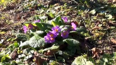 Kar beklenen Sakarya'da Kış çiçekler açtı