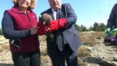 Tedavisi tamamlanan akbaba ve kartal doğaya bırakıldı - AFYONKARAHİSAR