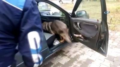 narkotik -  Tek ayaklı uyuşturucu taciri, narkotik köpeği 'Ece'ye yakalandı