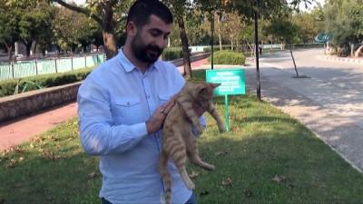 Otomobilin çarptığı sokak kedisinin tedavisini üstlenip sahiplendi