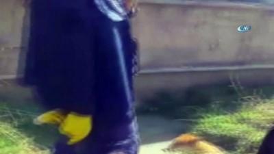 kopek -  Balçığa saplanan köpeği itfaiye kurtardı