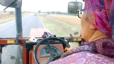 Çiftçi 'Feride Abla'nın azmi takdir topluyor (2) - KIRKLARELİ