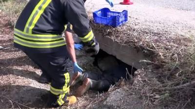 Köpek yavruları boğulmak üzereyken bulundu - MUĞLA
