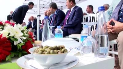 Safitürk'ün bir hayali daha gerçek oldu...Derik'te Zeytin Festivali düzenlendi