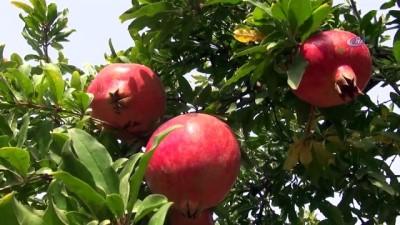 Şanlıurfa Büyükşehir Belediyesi'nden dar gelirli ailelere meyve dağıtımı