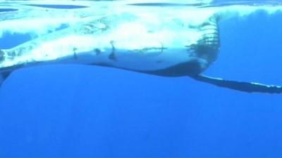 Balinalara çok fazla yaklaşan turistler araştırmacıları endişelendiriyor