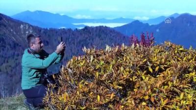 Karçal Dağları'nda sonbahar güzelliği - ARTVİN