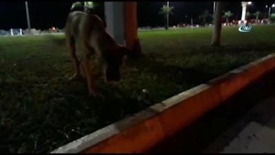 amator -  Köpekle farenin kavgasında kazanan fare oldu