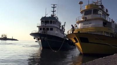 Batı Karadeniz'de balık bereketi - DÜZCE