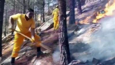 Ormanlık alan 14'üncü kez yandı
