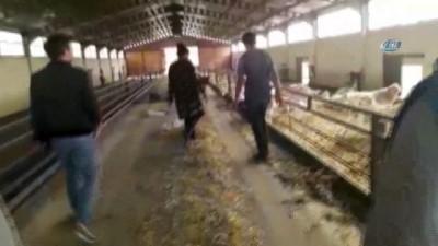 Denizli'de aç bırakıldığı öne sürülen keçiler telef oldu