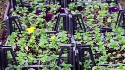 Siirt fıstıktan sonra ceviz ve süs bitkisi üretiminde de bölgenin merkezi olacak