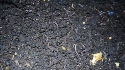 Söke'de genç girişimci evinin bodrumunda solucan gübresi üretiyor