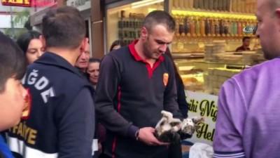Kuruyemiş makinesinin içinde mahsur kalan kediyi itfaiye ekipleri kurtardı