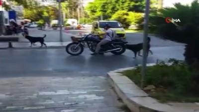 yasli adam -  Ekmek almaya giderken köpeklerin saldırısına uğrayan 80 yaşındaki yaşlı adam yaralandı