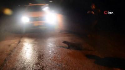 Sinop'ta su samuru görüldü