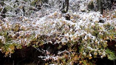 Abant Tabiat Parkı beyaza büründü - BOLU