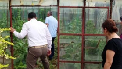 Antalya'da dolu tarım alanlarına zarar verdi