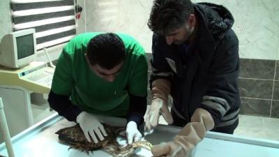 Yaralı halde bulunan erguvani balıkçıl tedavi altına alındı - AĞRI