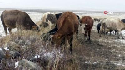 hava sicakligi -  Kars'ta kar ve tipiye yakalanan çobanlar zor anlar yaşadı
