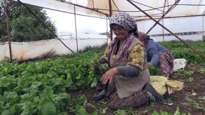 İstanbul'da sofraları Eskişehir 'yeşillendiriyor' - ESKİŞEHİR