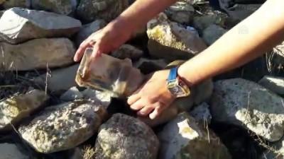 Plastik kapta başı sıkışan köpeği vatandaşlar kurtardı - KONYA