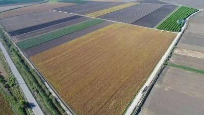 Adana'da soya hasadı başladı...Hasat havadan görüntülendi