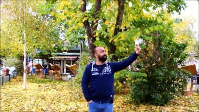 Kaldırımlara düşen sarı yapraklar vatandaşlara görsel şölen yaşatıyor