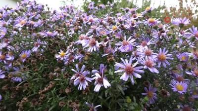 Beytüşşebap'ta sonbaharın güzelliği göz kamaştırıyor