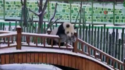 - Pandalardan Kar Keyfi