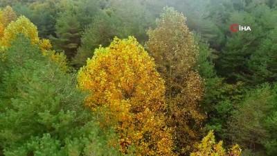 Sonbaharın renklerine bürünen Atatürk Arboretumu havadan görüntülendi