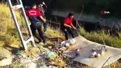 Tüfekle vurulan ve sulama kanalında mahsur kalan köpek itfaiye ekipleri tarafından kurtarıldı