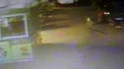 AVM'de bebek cesedi şoku... Sokak köpeğinin bebek cesedini taşıma anı kamerada