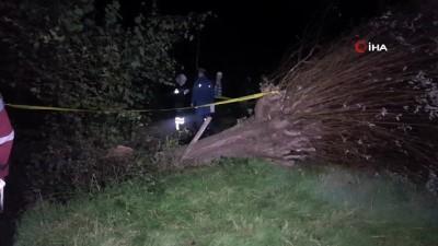 yasli adam -  Kışlık odun için kestiği ağacın altında kaldı